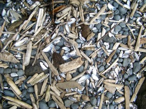 (CCO Public domain image) My driftwood pile is already getting mixed in with my rocks and shells from elsewhere.